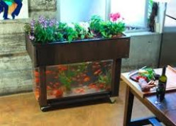 Aquaponic farming is on the up swing