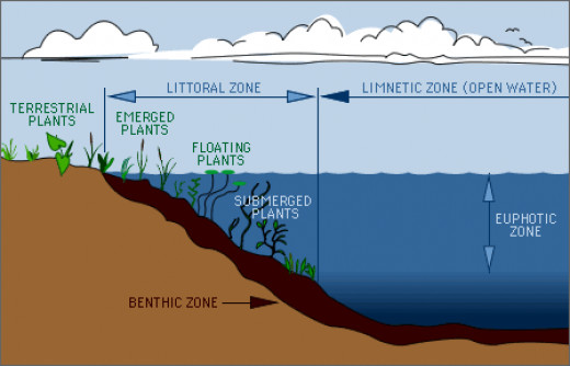 Lake Ecology | Biological - Lake Zones via