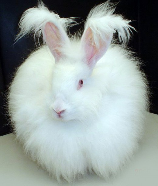 If you'd like to ask Arvind about fluffy bunnies and bubble gum, go ahead.