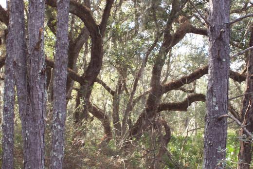 Deep in Florida swamps