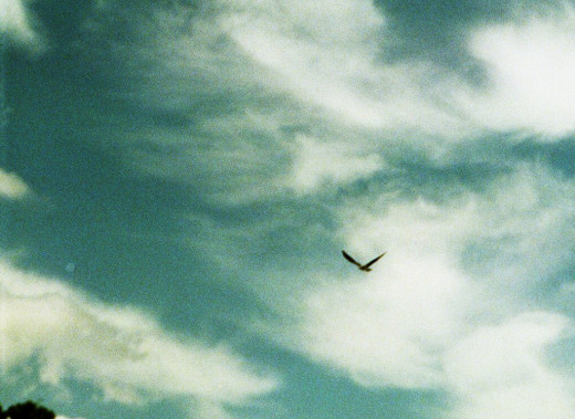 In our dreams, we fly, and see what once was.