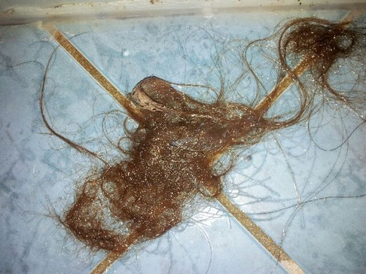 You don't want to share a shower with me. This is about a week's worth of hair loss due to rheumatoid arthritis and arava.