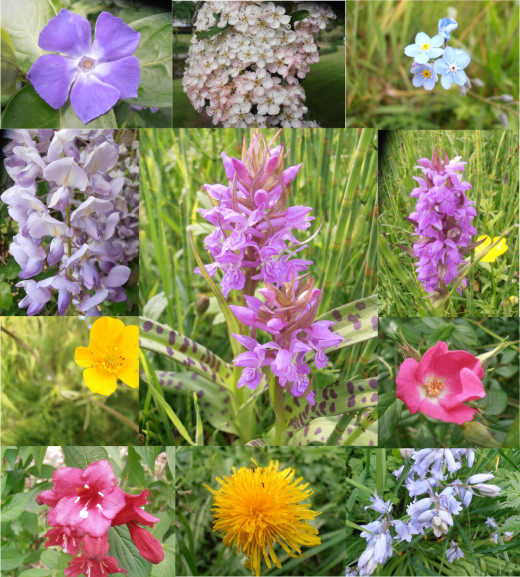 This picture shows some of the wild flowers we encountered during our walk through the typical Dutch landscape.