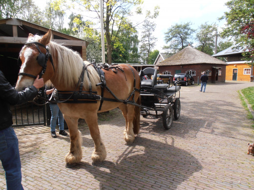 A draft-horse in the nearby petting zoo