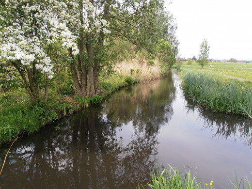 Typical Dutch ditches at level 'C', five meters below sea level