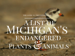 Endangered Species in Michigan