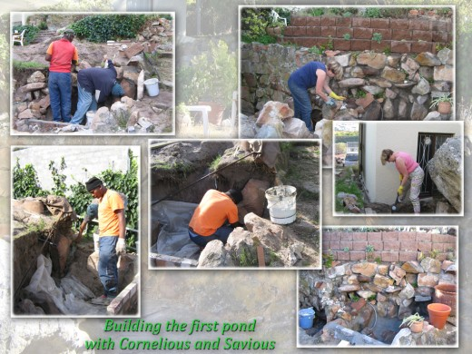 With the help of two amazing workers, Cornelius and Savious they followed my idea. The old crumbling walls had to be replaced with a new wall from the rocks found on the property. Our first pond was built on the second level of the property.