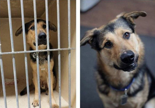 Sharing shelter dogs' pictures on Facebook can save lives. Here is one amazing transformation - Barnaby - now happy in a new home.