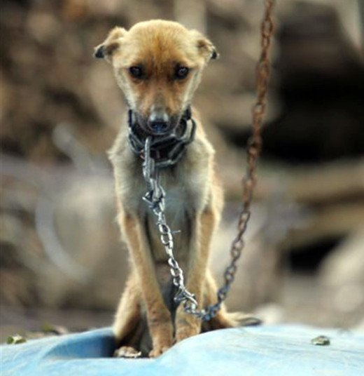 A dog chained in a yard - should people take direct action if they think it is neglected or abused?