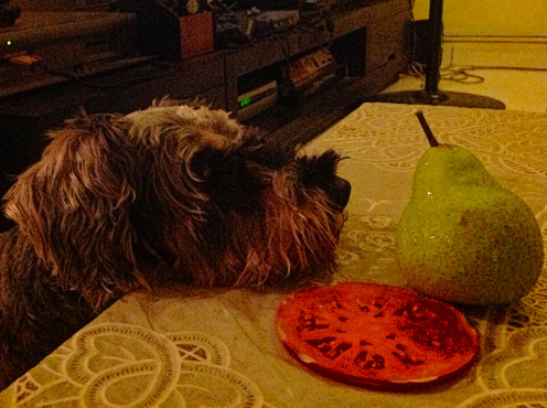 Play includes a fascination with fruits.