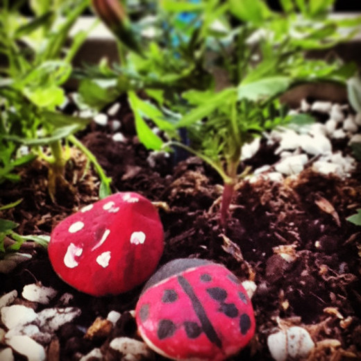 Ladybugs are a symbol of good luck and prosperity.
