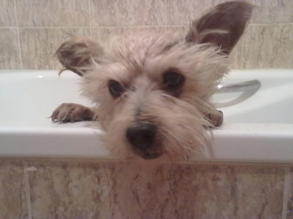 How To Give Your Dog A Bath Keep Your Dog Safe In The Bath