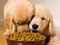 Best Dog Kibble for Dogs That Are Vomiting Food