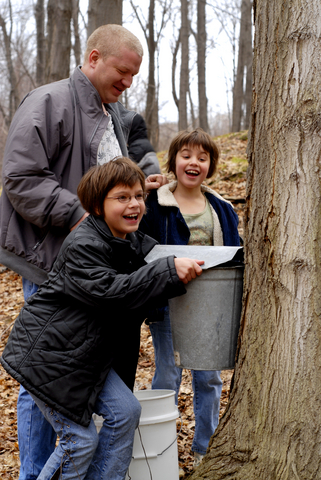 Maple sugaring time is often a family activity.