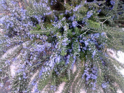 The herb Rosemary can help to speed up circulation and aid the healing process.