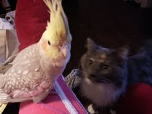 Lucy with April my bird.