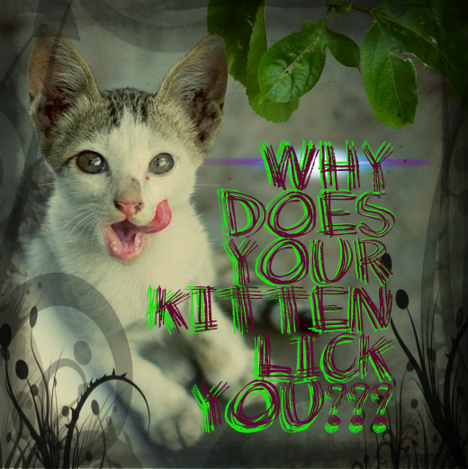 Have you ever wondered why your kitten licks you?