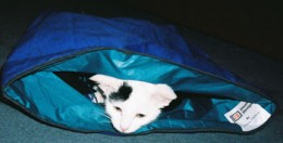 and playing with a crinkly cat bag