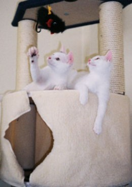 Playing on their cat tree