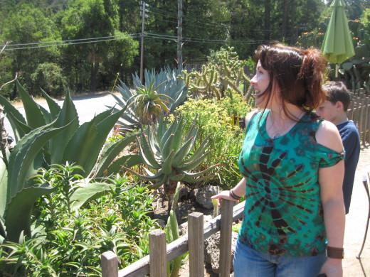 So many succulents!