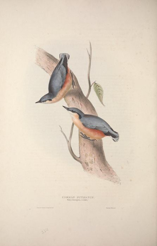 Birds of Europe ---Gould 1837