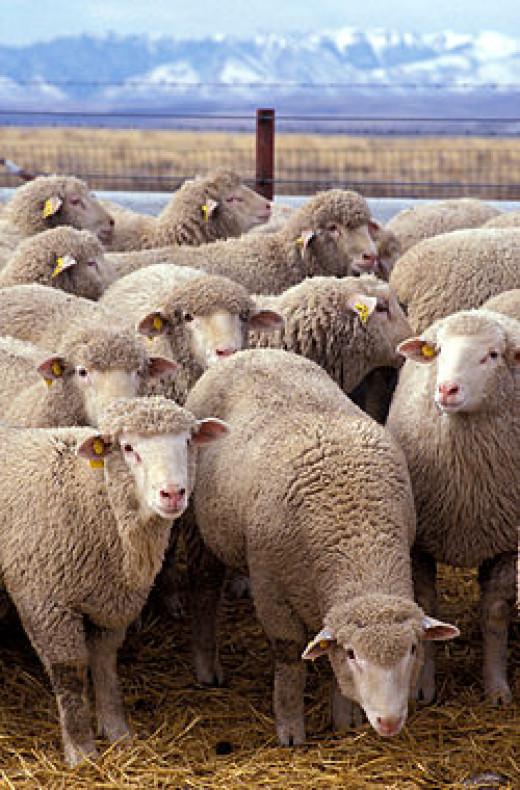 250px-Flock_of_...