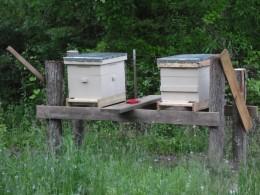 New Honey Bee Hives