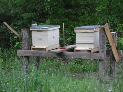Two ten frame Langstroth style honey bee hives.
