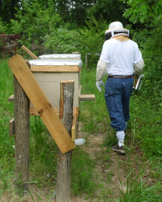 Beekeeper at Hives