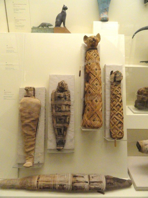 Animal Mummy Exhibit in the Royal Ontario Museum, Toronto, Ontario, Canada.