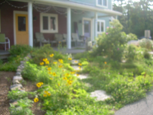 A neighbor's beautiful garden in our co-housing community