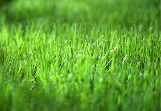 The green grass represents a reviving relationship.