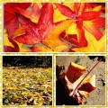 Mabon Celebrations & Mabon Recipes