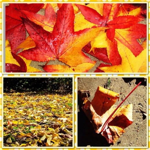 Mabon is the beginning of Autumn...when the leaves will begin to change and fall from their branches.