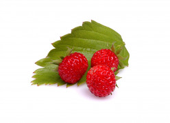 Wild Strawberries Versus Mock Strawberries
