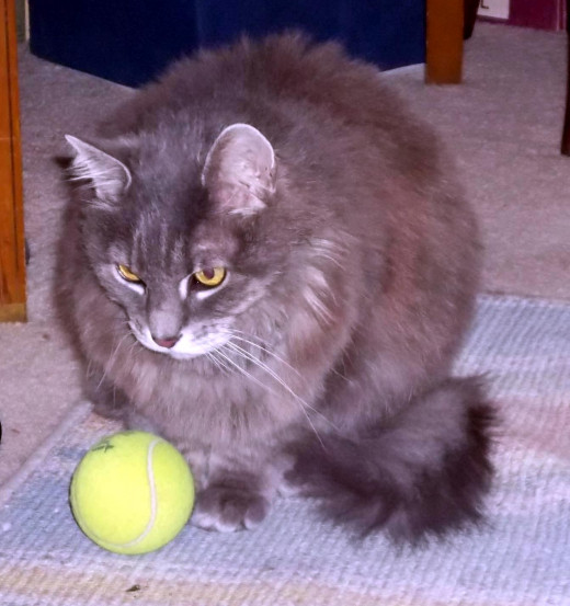 Angel and her favorite tennis ball