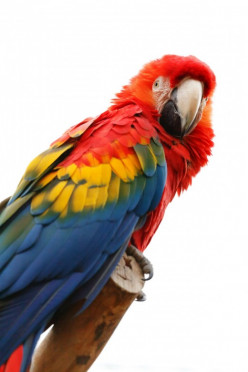 Aren't Parrots Wonderful? 70 Exquisite Parrot Pictures and 25 Parrot Clipart