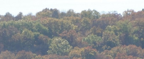 Ozark mountain forested hillside