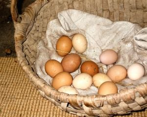 Basket of eggs, ready to sell