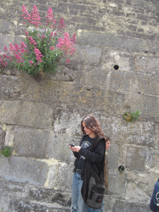 Daughter beneath wildflowers blooming triumphantly from a crack in the grim cement wall.