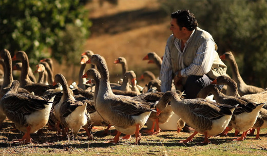 Edoardo Sousa with his geese taken during an interview with Dan Barber.