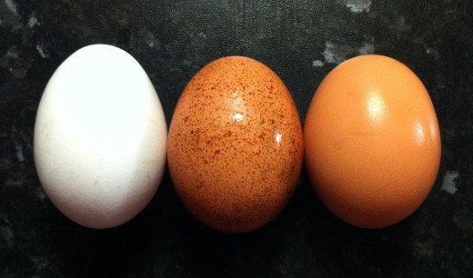Different colors of eggs.