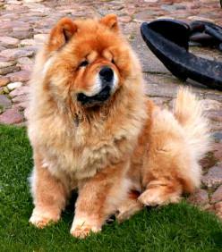 Top 10 Healthiest Dog Breeds