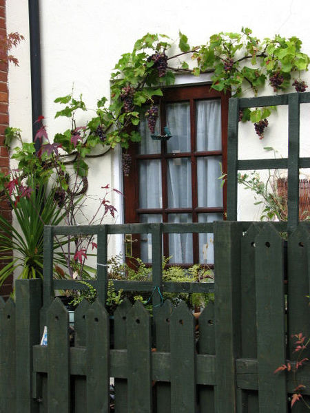 A trellis is important to support climbing fines.