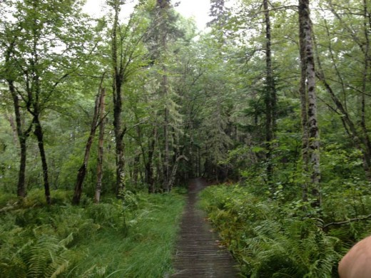 Kejimkujik national park in the lovely rainy summer of 2013.  Get ready for camping and canoeing weather!