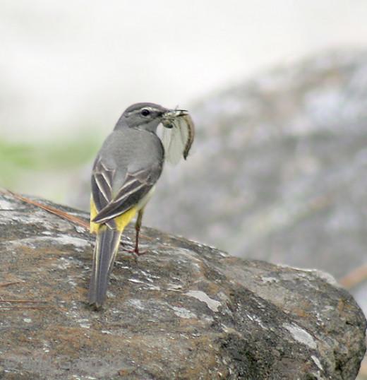 taken in the Manali District of  Himachal Pradesh India
