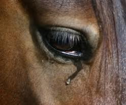 When a horse looks you in the eye .......Verse