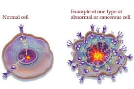Normal and cancer cells