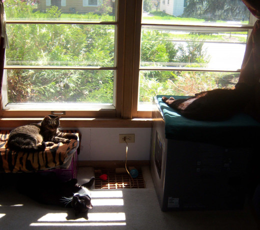 Our three adopted kitties, all enjoying the morning sun.