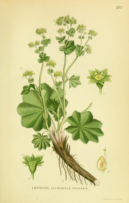 Billeder of Norden's Flora